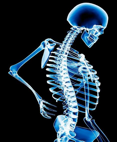 http://waynejoseph.files.wordpress.com/2010/02/bone-health-photo.jpg